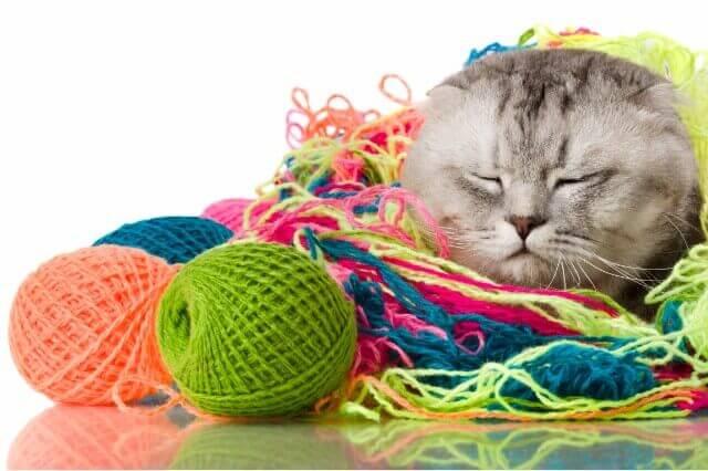 猫の健康管理インストラクター口コミ評判